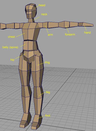 Настройка скелета в Maya | Настройка скелета модели человека в Maya.