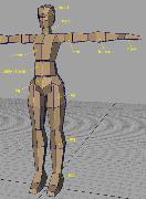 Настройка скелета в Maya