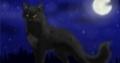 Wild Cats Online